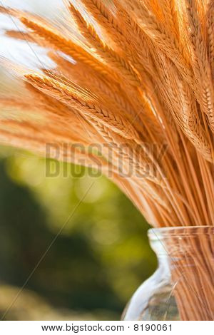 Wheat Stalks In A Vase