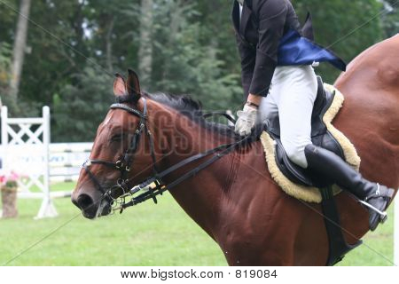 Cavalo de salto