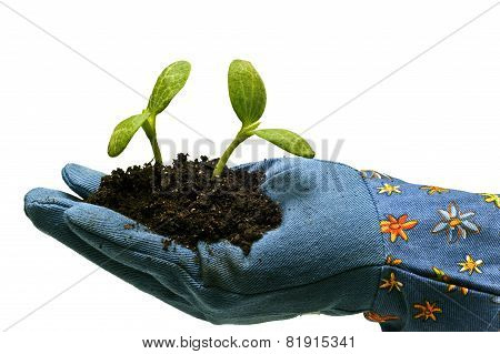 Gardening Glove With Baby Plants