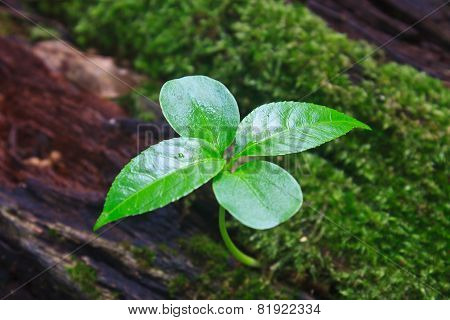New Green Sprout Growing From Dead Log