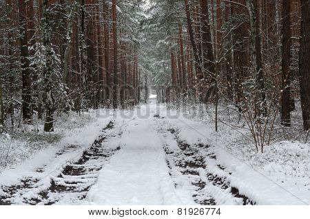 Forest in winter.