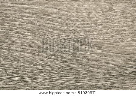 Longitudinal Section Tree Of Beige Color
