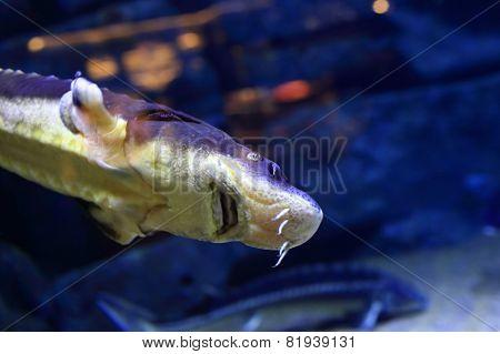 Blue Fish In The Big Aquarium