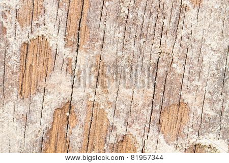Soil From Termite Eaten Wood Wall