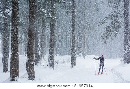 Cross Country Skiing Through The Woods.