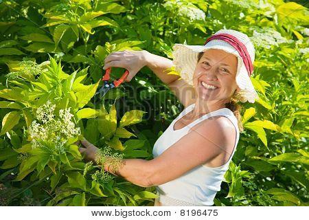 Senior Woman Cutting  Cornus