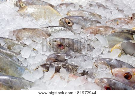 Fresh Fishes On Ice At The Fish Market