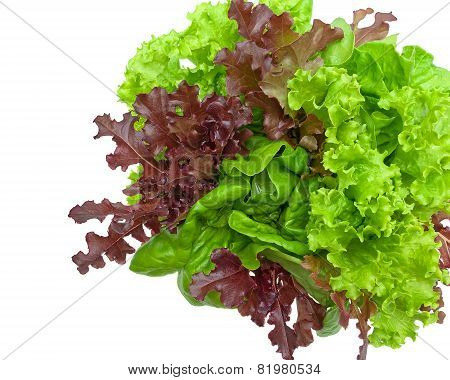 Fresh Lettuce Leaves Of Different Types Isolated On A White Background
