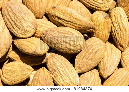 closeup view of almonds kept under direct sun for drying