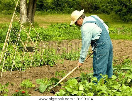 Man Weeding His Garden