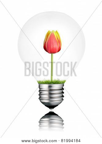 Light Bulb With Red Tulip Flower Growing Inside Isolated