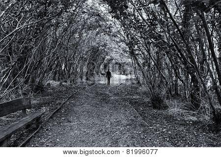 Autumn Pathway, Stormont, Co. Antrim, Ireland