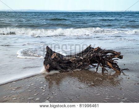 Driftwood On Ballycastle Beach, Co. Antrim, Ireland