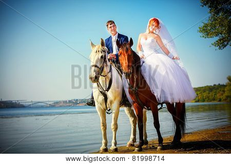 Kiss Of The Groom And The Bride During Walk In Their Wedding Day Against A White Horse And Brown Hor