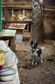 foto of stray dog  - sad dog in dog shelter in autumn - JPG