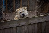 stock photo of begging dog  - sad dog in dog shelter in autumn - JPG
