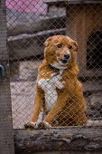 pic of begging dog  - sad dog in dog shelter in autumn - JPG