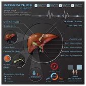 foto of liver  - Liver And Gallbladder Medical Infographic Infochart Design Template - JPG