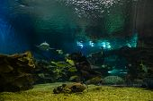 pic of marines  - A large aquarium with marine animals. Fish and shark in a huge aquarium. Marine life. Photo underwater. Fish under water. Shark underwater.