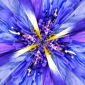 image of symmetrical  - Blue Flower Center Symmetric Collage Made of Collection of Various Wildflowers - JPG