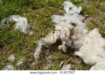 Strands Of Wool Fleece