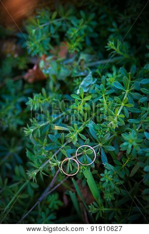 Green plant and wedding rings
