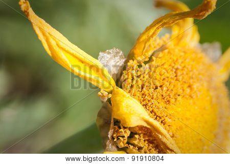Death Pollen Flower