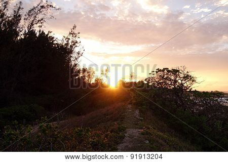 Sunset Through The Trees Along A Dirt Path By The Ocean