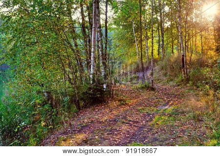 Autumn landscape. Bright colored leaves on the branches in the autumn forest.