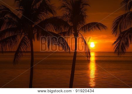 Atlantic Beach Twilight With Sunset And Palm Trees Silhouette