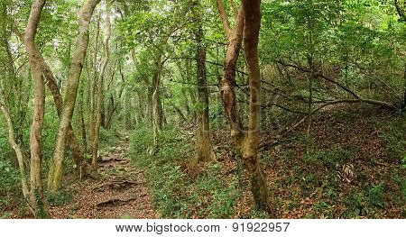 Dense Green Forest With A Rugged Trail