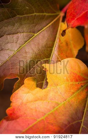 Leaves in autumn or winter colors
