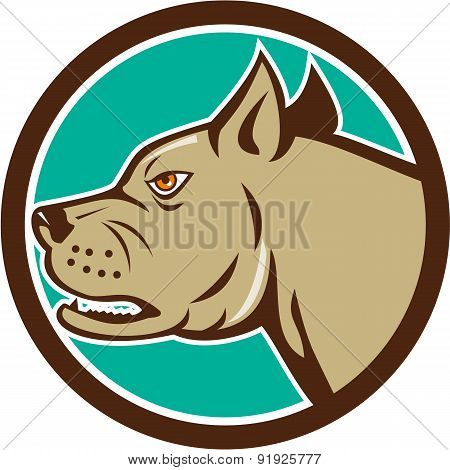 Mastiff Dog Mongrel Head Circle Cartoon
