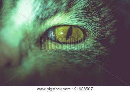 Macro Of Tabby Cat Eye