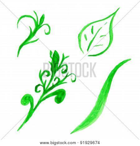 Watercolor set of floral elements