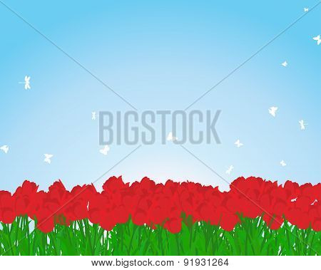 Red Tulips Meadow
