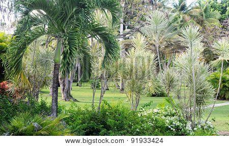 Park In Sainte Anne In Guadeloupe
