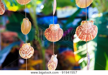 Sea Shells Souvenirs