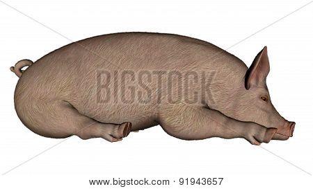 Pig sleeping - 3D render