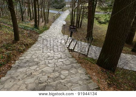 Small Pathway going trough the forest