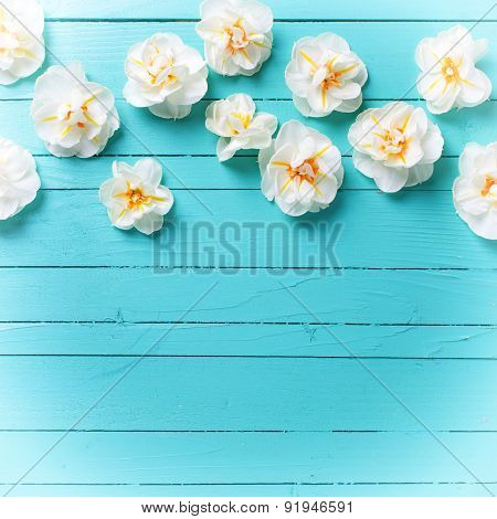 Narcissus Flowers On Green Background