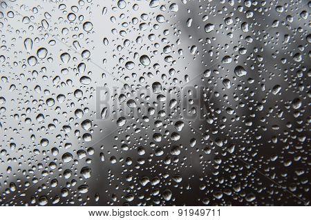 Trees In Raindrops