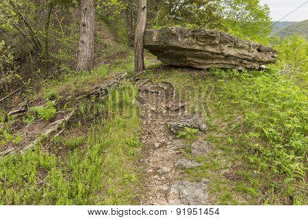 Spring Trail Scenic