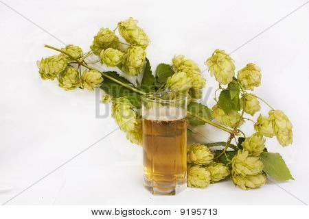 Beer in glass with hop cones