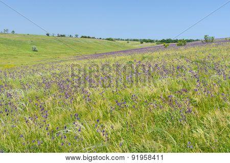 Wild Ukrainian steppe at spring season
