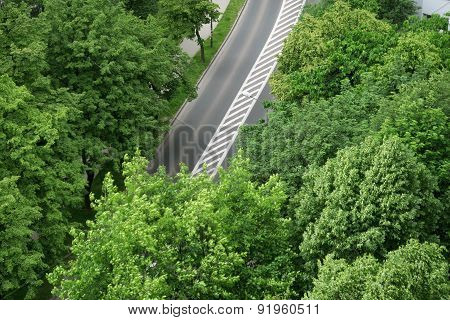 Aerial view of a street and trees