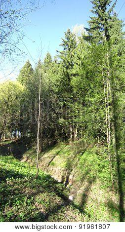 Forest Ravine