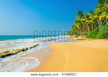 Amazing exotic sandy beach with high palm trees