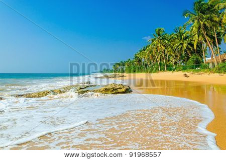 Amazing exotic sandy beach andhigh palm trees