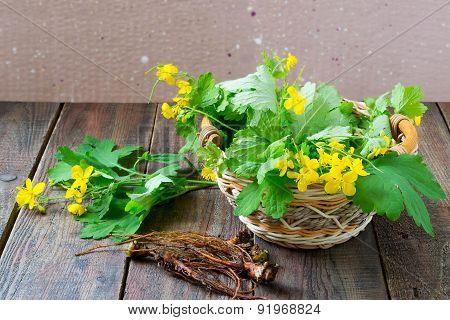 Celandine - A Medicinal Plant For Herbal